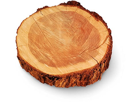 Andersen is a strong advocate for advancing sustainable practices in wood sourcing and utilization.